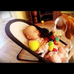 Guilty Dog Apologizes To Baby For Taking Her Toys In The Cutest Way Possible