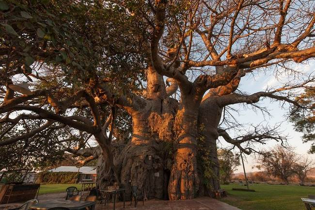 1.) Sunland Baobab: This bar in South Africa certainly has a unique setting: the inside of a tree!