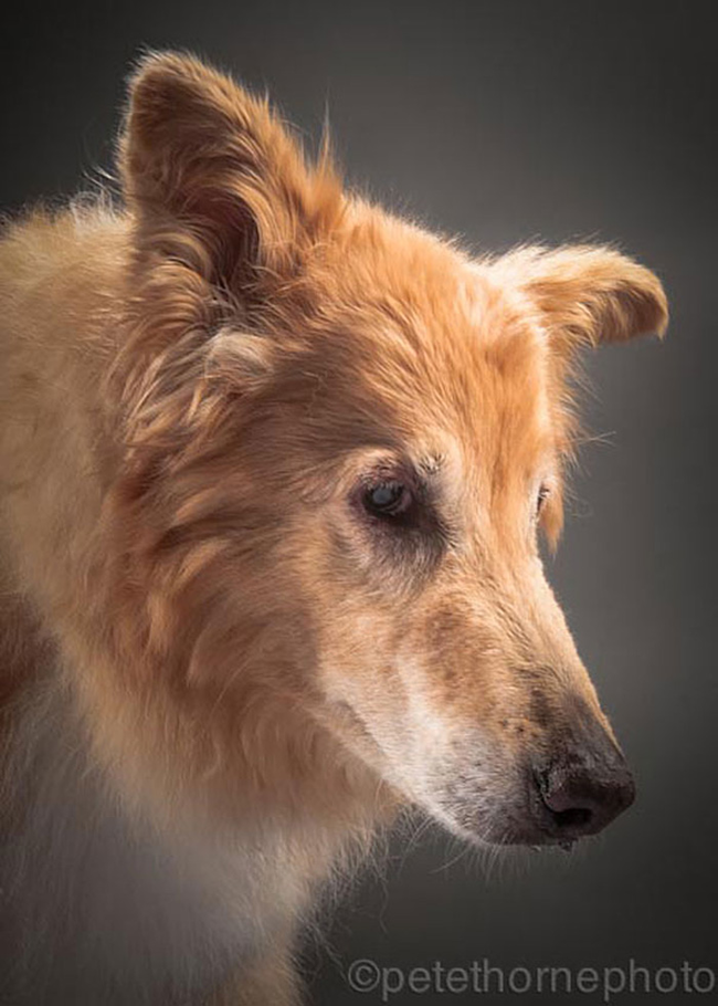 3.) Clovis, 14 years old. He sadly passed away not long after the photoshoot.