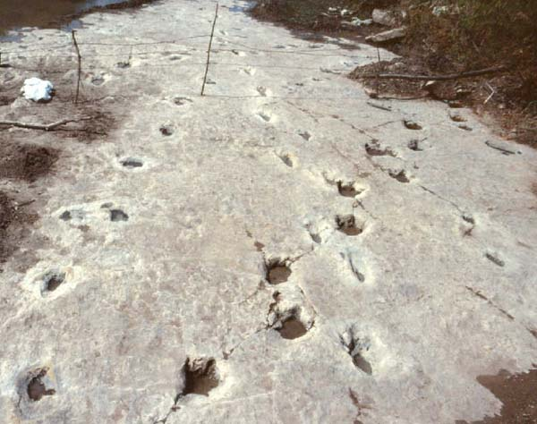 5.) Co-Existing Dinosaur & Human Prints: Although many of these fossils were proven to be faked, there are some samples of human and dinosaur fossil footprints found together in the same ancient rock layer that are a mystery. If they were real, this would disrupt the theory of evolution.