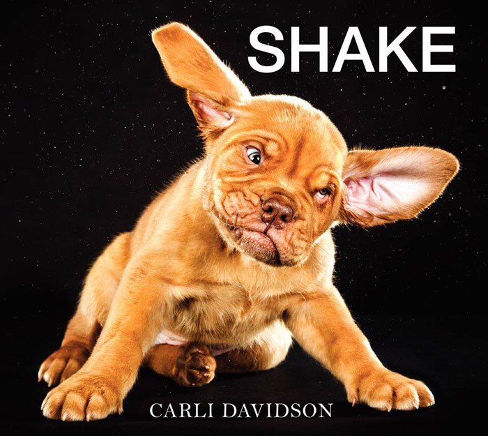 dogs mid shake by carli davidson (3)
